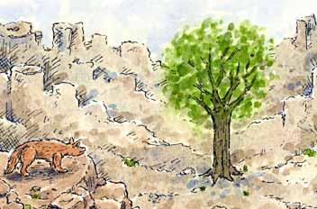 The Lady Magpie_fox_tree